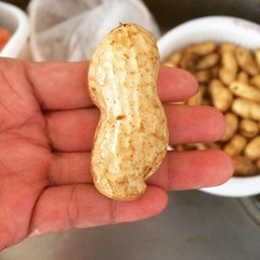 fresh HUGE peanuts from Chiba...turning into chinese boiled peanuts soon❤︎ ・ ・ ・ #落花生 #ピーナツ #千葉産 #peanuts #chiba #boiledpeanuts #tokyo #japan #東京
