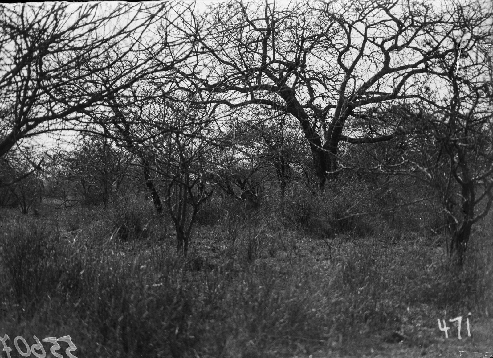 Национальный парк Крюгера. Два льва в лесу