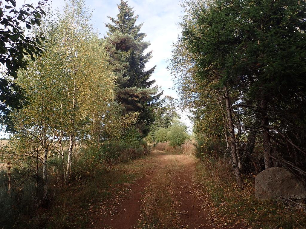 Petite promenade au bois des Fraux