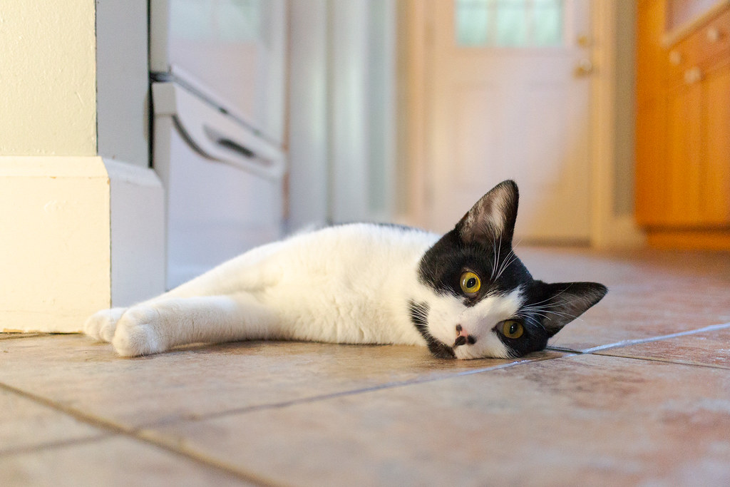 Our kitten Boo lies down on the kitchen tile as he gets a little overwhelmed on his first access to the full house