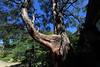 Photo:Tree / 木(き) By TANAKA Juuyoh (田中十洋)