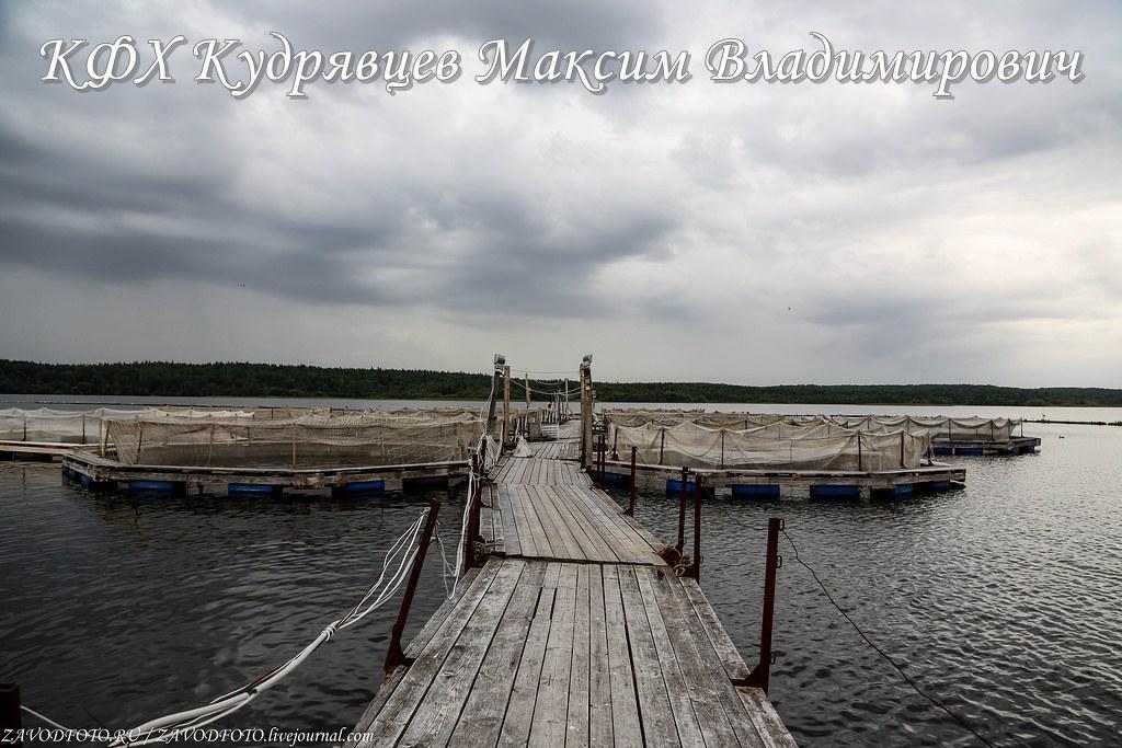 КФХ Кудрявцев Максим Владимирович