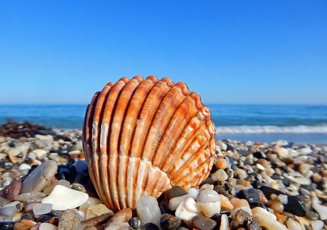 Herzmuschel am Strand, Nikon COOLPIX S9900