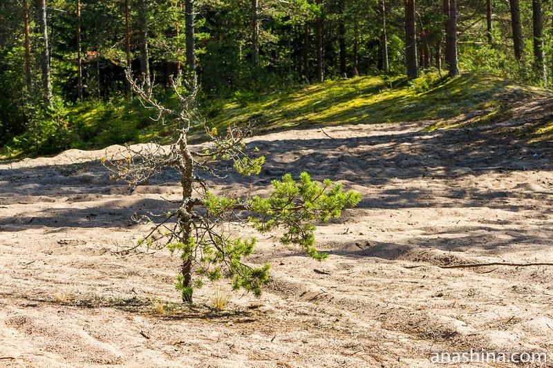 Восточное Приладожье, Ладожское озеро, Карелия, пляж
