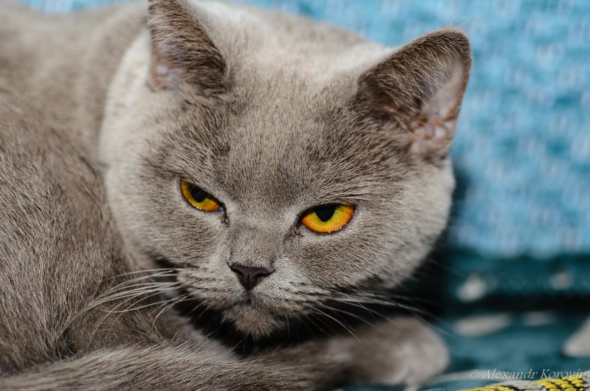 20121104_160552_кошки