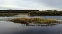 River Tweed at Wark, Oct 2018