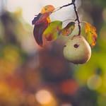 Fruit Garden Bokeh - Tarbek - Schleswig-Holstein - Germany