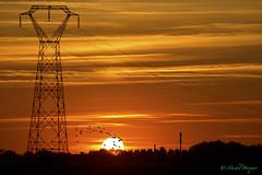 Sunset  and birds - Photo of La Neuville