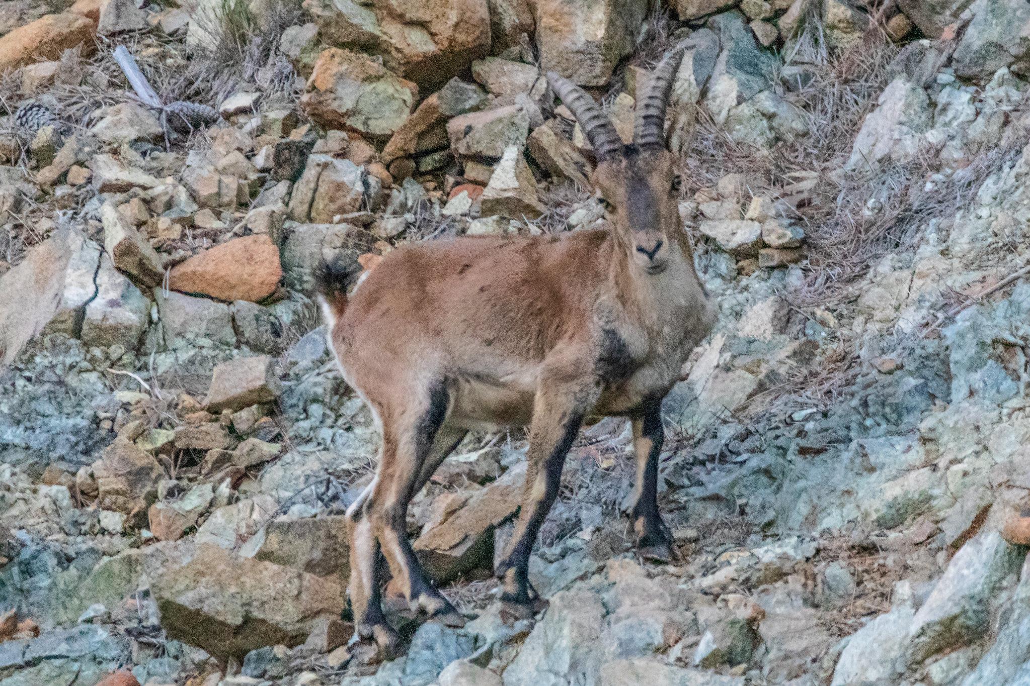 Fotos de animales de todo tipo incluyendo mascotas que más te gustan - Página 12 45735360621_24b7f1b4f8_k