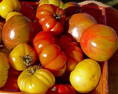 Sun on tomatoes_3014