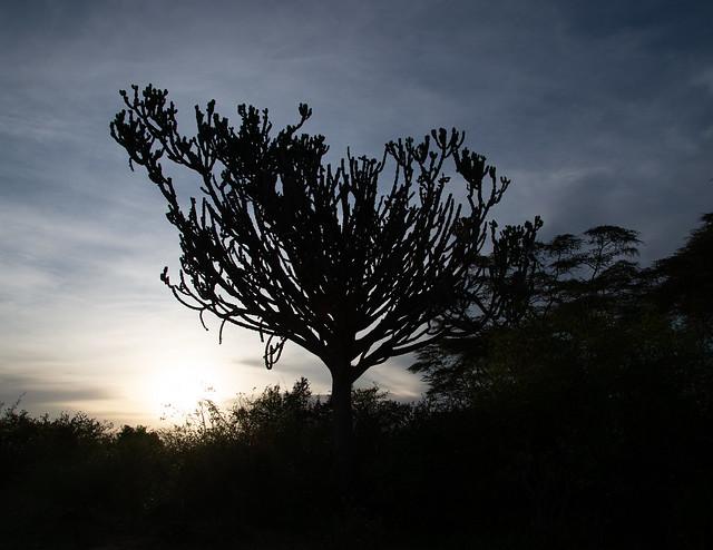 Tree, Nikon D610, AF-S Nikkor 24-120mm f/4G ED VR