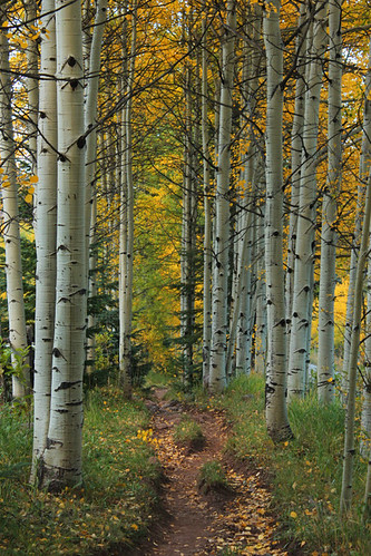 aspen co colorado 2018 trees path landscape horse maroon creek road september