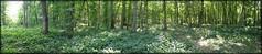 moreuil wood