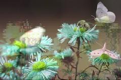 Nature life - Photo of Champtercier