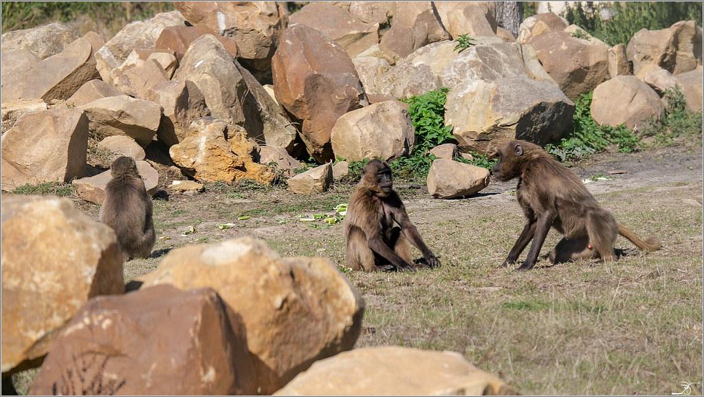 Terre des singes part4 44285160024_409559b13e_b