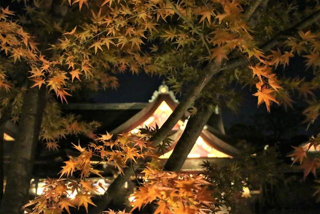 kitanotenmangu-lightup016