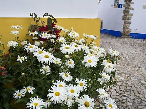 Flores para un día triste. #sadday #flowers #obidos #portugal