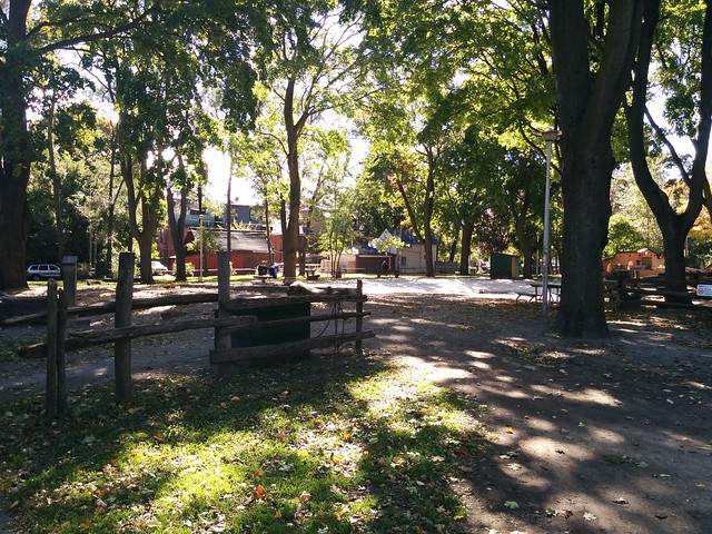 In Dufferin Grove Park (4) #toronto #dufferingrove #dufferingrovepark #parks #fall #autumn #latergram