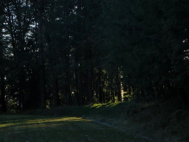 Light intrudes, Canon POWERSHOT ELPH 330 HS