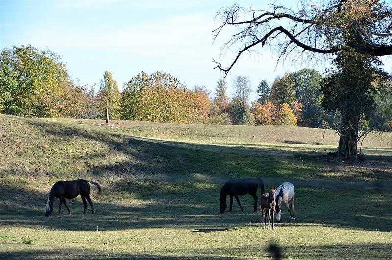 Horses 25.10 (3)