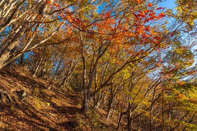 僅かに残る紅葉の坂道