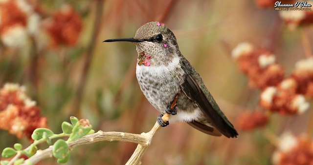 Neither the hummingbird nor the flower wonders how beautiful it is.