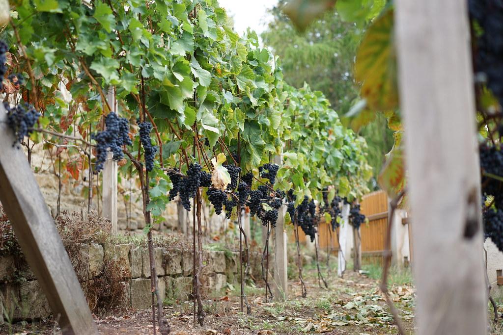 Decin winery