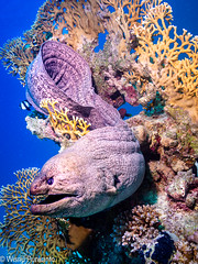 Hurghada -9050422.jpg