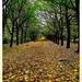 Dear Autumn....