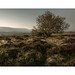 A bit more field by vuzephotography.co.uk