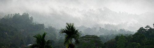 sinharajaforestreserve srilanka deniyaya continentsetpays asie asia lk lka réserveforestièredesinharâja mataradistrict