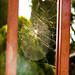 Telarañas (1 de 1) por Moyses Gamboa P