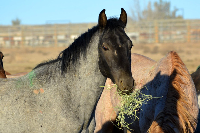 Warm Springs horses and burros