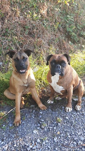 Mon, Oct 29th, 2018 Lost Female Dog - Right Next To The Spa Gaa Pitch, Killarney, Kerry