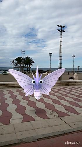049 venomoth