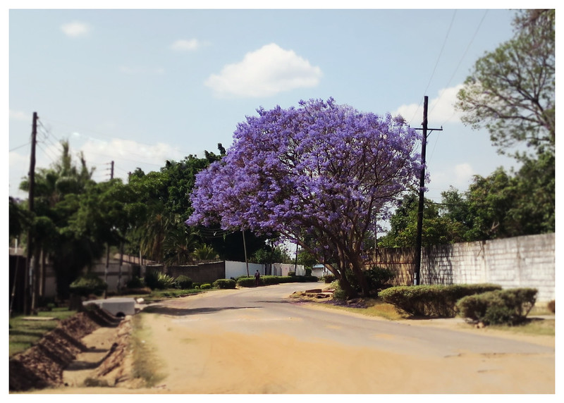 the road to school | jacaranda | lusaka, zambia