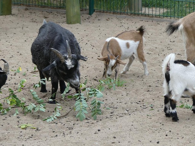Tierpark Zabakuck - 28.08.18