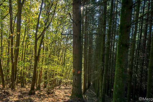 Les deux forêts