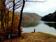 pe malul lacului/on the shore of the lake