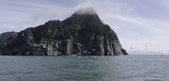 Island in Kenai Fjord