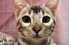 Feline Photography