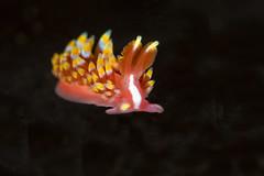 nudibranch12Sept28-18