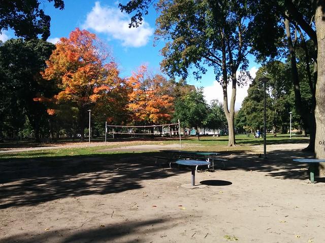 In Dufferin Grove Park (6) #toronto #dufferingrove #dufferingrovepark #parks #fall #autumn #latergram