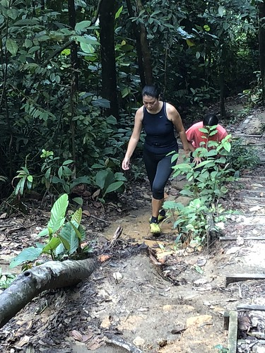 Bukit Gasing killer hike
