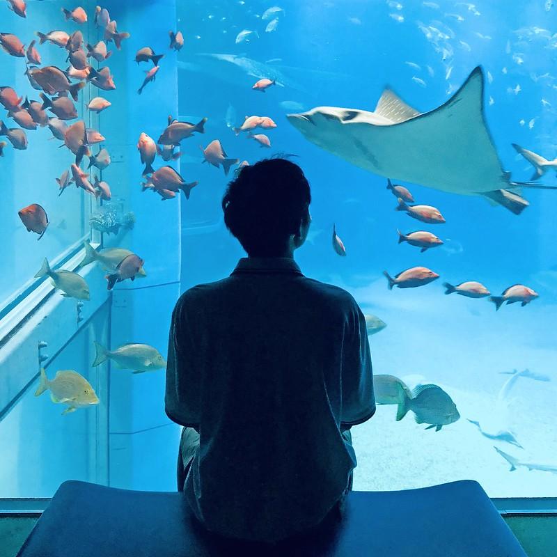typicalben Osaka Aquarium Kaiyukan