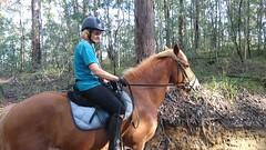 Shelley's Horse Videos