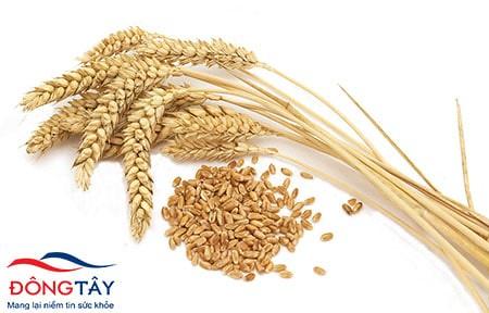 Phòng ngừa bệnh tiểu đường type 2 bằng ngũ cốc nguyên hạt