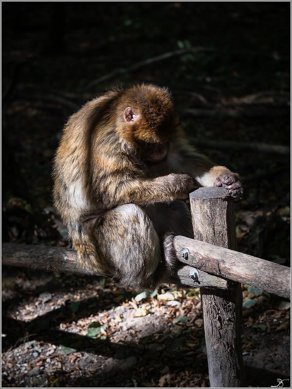 Terre des singes part3 44955976842_279ac4e084_c