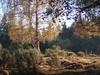 Au bois des Fraux