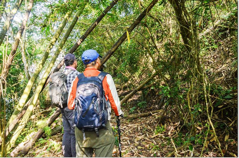 小林山登山步道上稜處